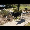 my wolfdog